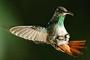 Zpěv křídel